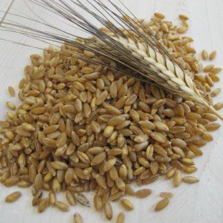 Farina Senatore Cappelli di grano duro