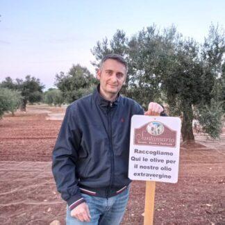 Olio extravergine di oliva Santamaria